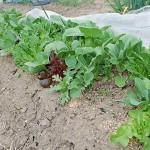 *2016年度*たかみん家の食費の秘訣☆家庭菜園に掛かる園芸費をまとめました