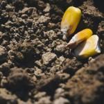 2016年4月*10坪家庭菜園の園芸費!遅れをGWで挽回中です…